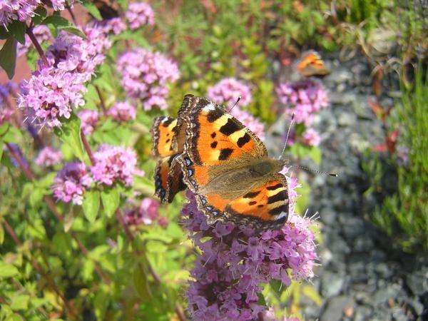 Schmetterlinge I
