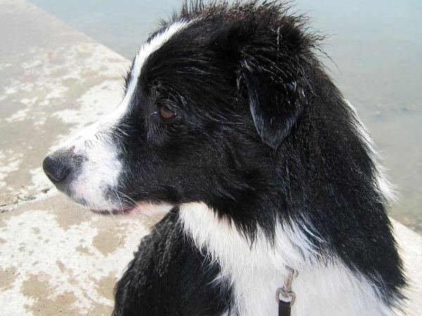 Cody wet