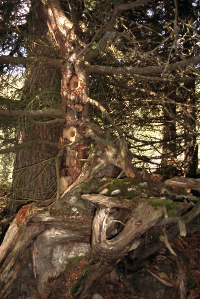 ein unheimlicher Baum *gg*