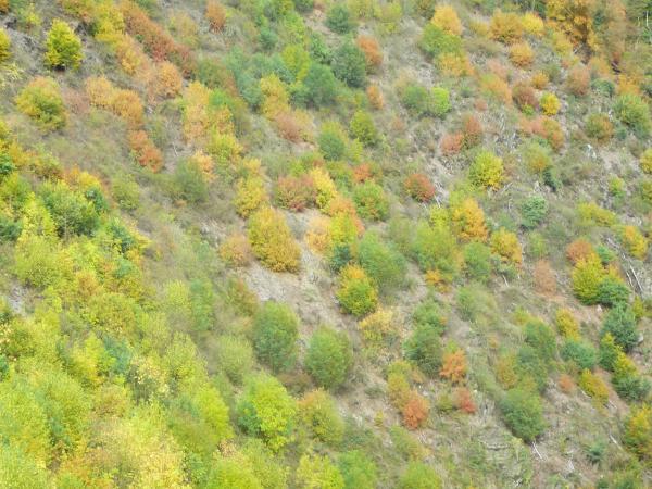 Herbststräucher am Berghang