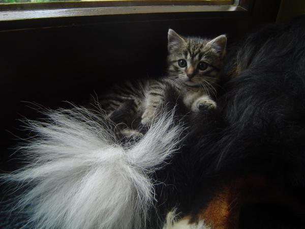 Hund & Katz *g*
