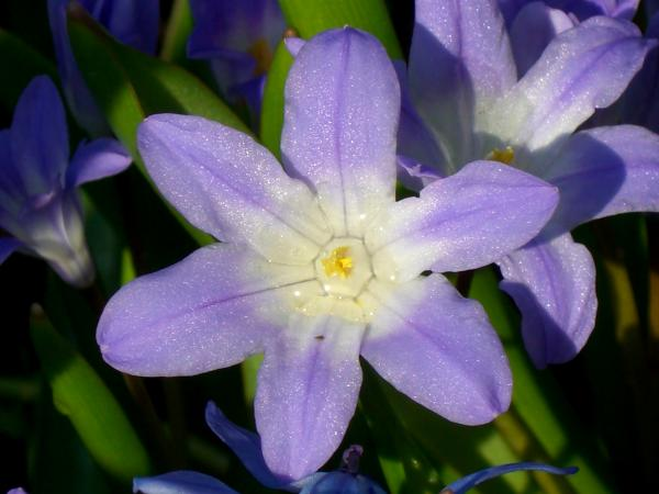 eine strahlende Lilie