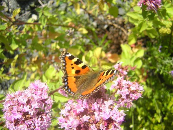Schmetterlinge III