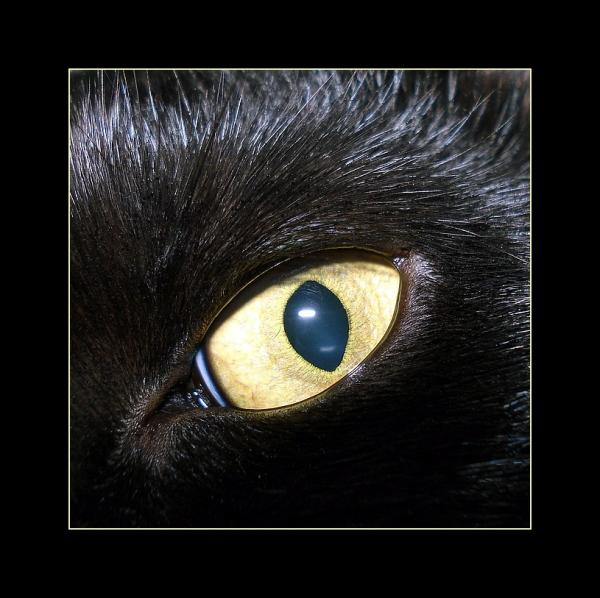 eye-cat-cher