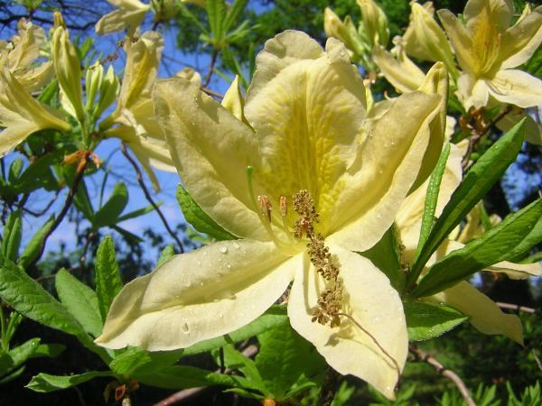 Hübschen Blüte