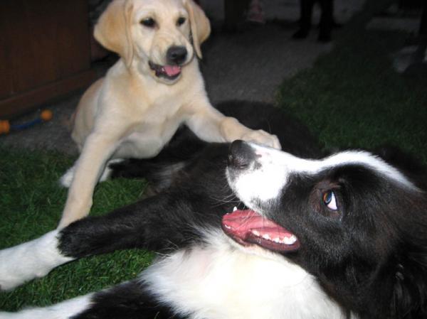 Cody&Lucy