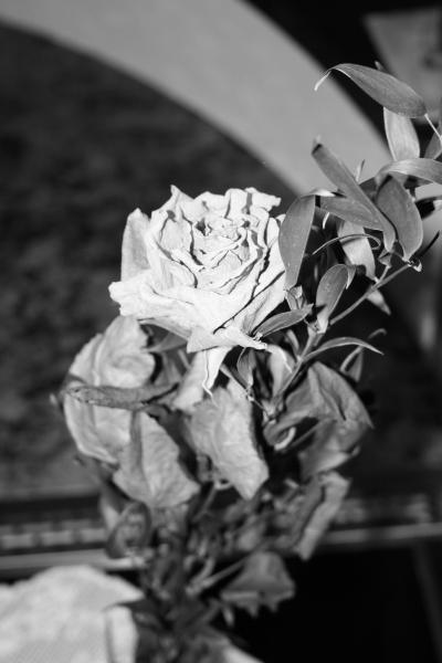 schwarz-weiße rose