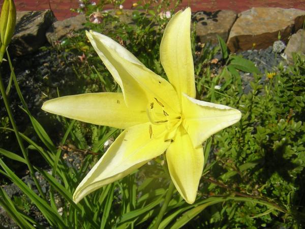 Noch eine Blume