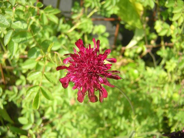Blume im Harz