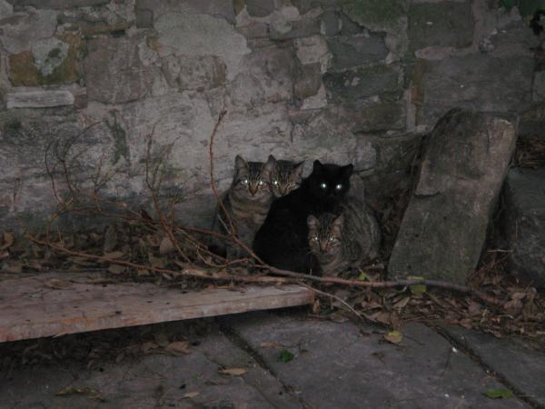 Katzen in Triest