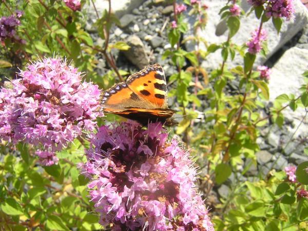 Schmetterlinge II