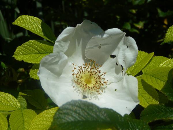 Blume auf der Fraueninsel I