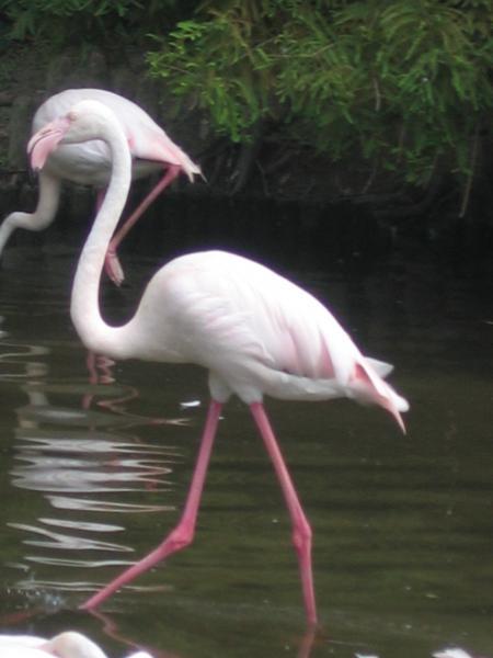 Ein komischer Vogel :D