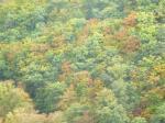 Bäume im Herbstlaub