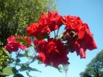 Blume auf der Fraueninsel II