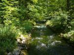 Bach am Königssee