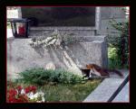 Leben auf dem Friedhof ...